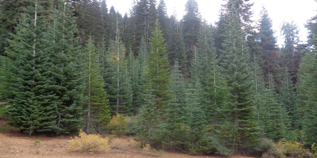 Welcome to Silvertip Tree Farm
